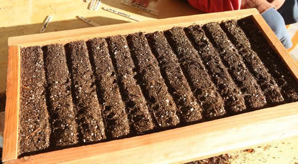 Ящик с почвой