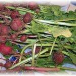 Мелкие плоды редиса