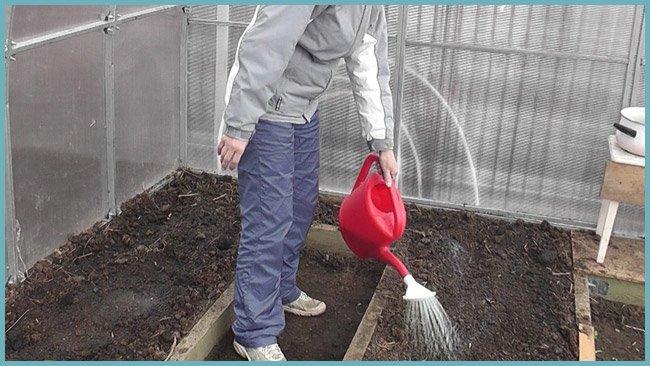 Подготовка теплицы к высадке томатов