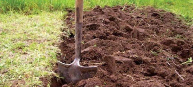 Глубокая перекопка почвы — мера профилактики