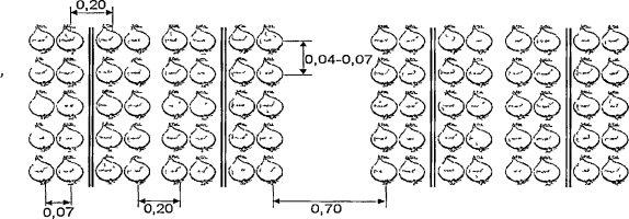 Схема посадки лука севка