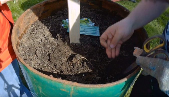 Посев семян в бочку