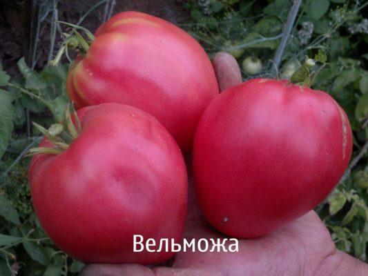 Плоды томата Вельможа