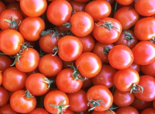 Плоды томатов Яблонька России