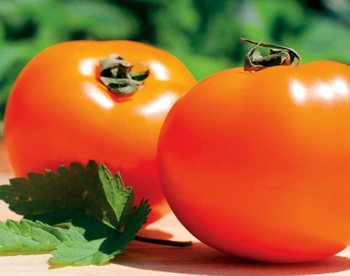 Спелые помидоры сорта Хурма