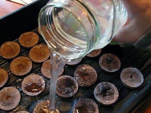Торфяная таблетка в воде