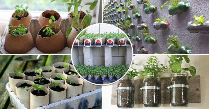 Способы выращивания рассады