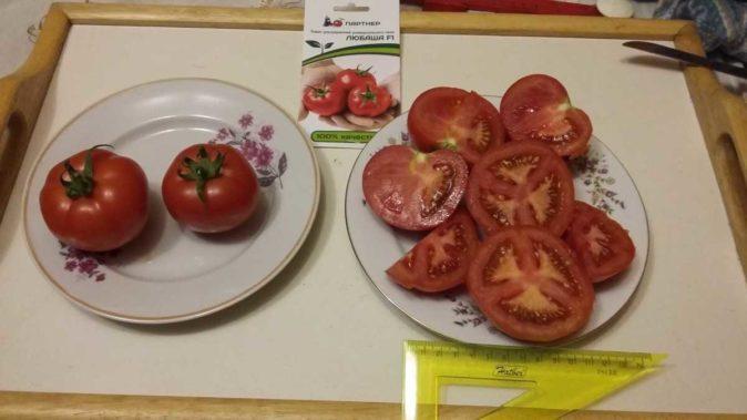 Плоды томата Любаша