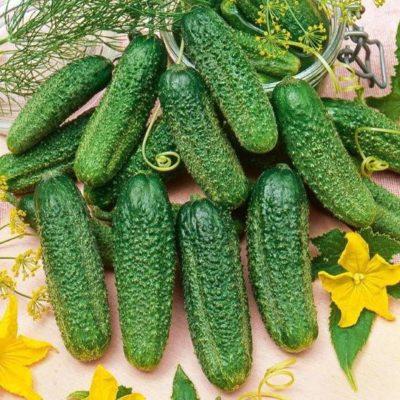 Огуречные плоды