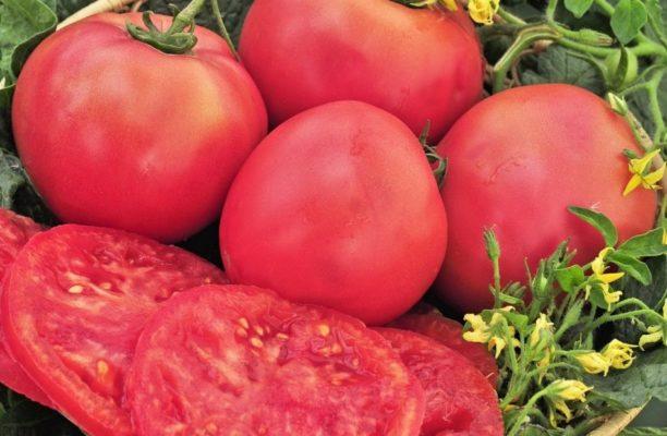 Плоды томата Розовый гигант