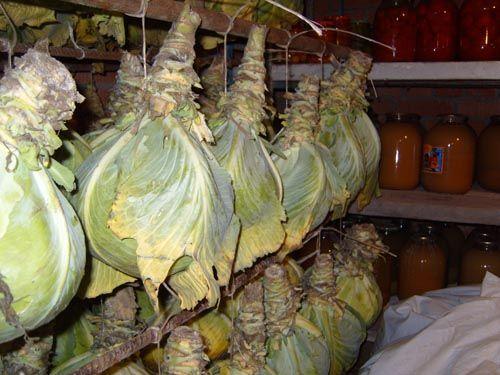 Подвешенные кочаны капусты