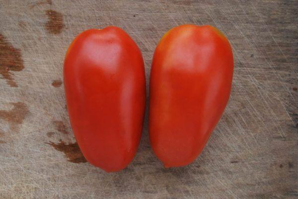 Плоды томата Ракета