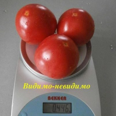 Плоды томата Видимо-невидимо