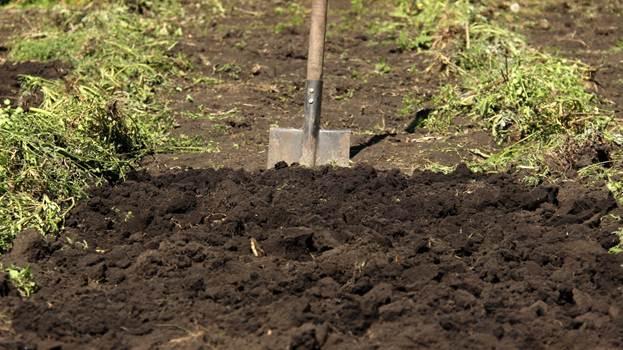 Подготовка грядки под цветную капусту
