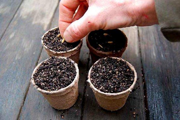 Торфяные горшочки с грунтом
