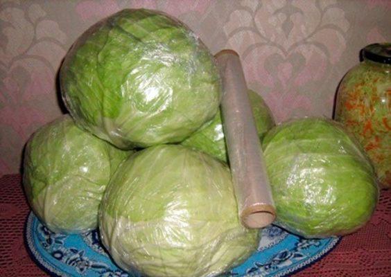Подготовка ранней капусты к хранению