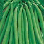Сорт фасоли Сакса без волокна 615