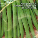 Сорт фасоли Мавританка