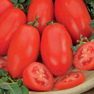 Плоды томата Челнок