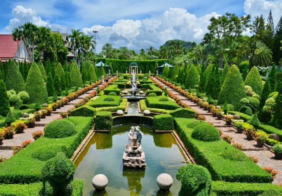 Туя в тропическом саду Нонг Нуч