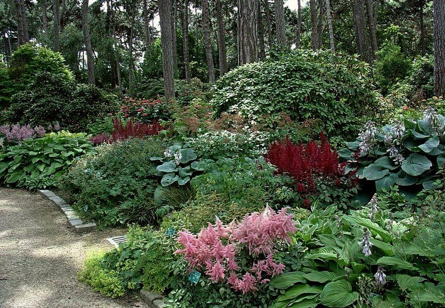 цветы для тенистого сада фото придает