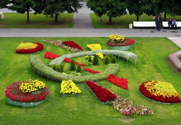 Циния в арабаскех и узорных садах