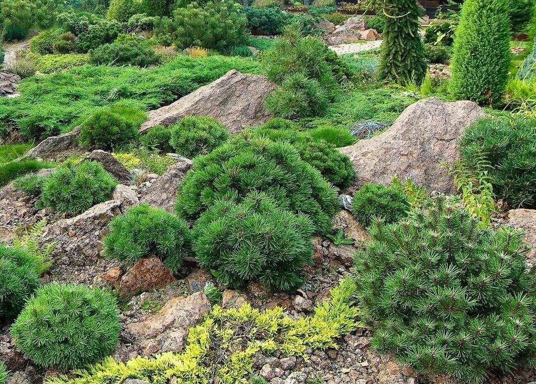склон с камнями в ландшафтном дизайне фото цбз сливал большинство