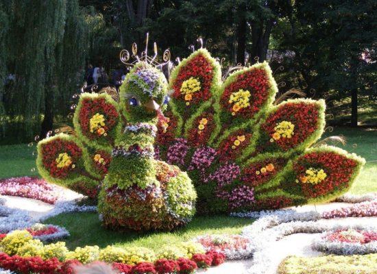 Колеус в цветочных топиарных скульптурах