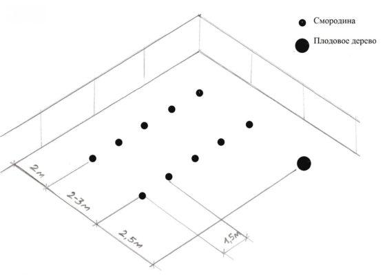 Схема высадки чёрной смородины рядами