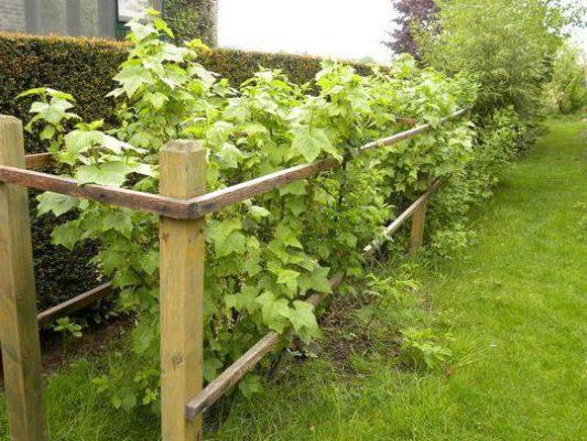 Место для ягодных кустов