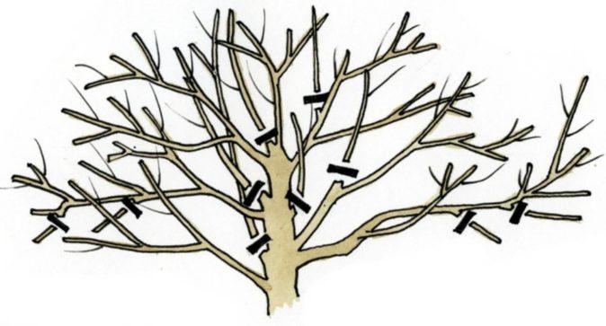 Прореживание кроны дерева