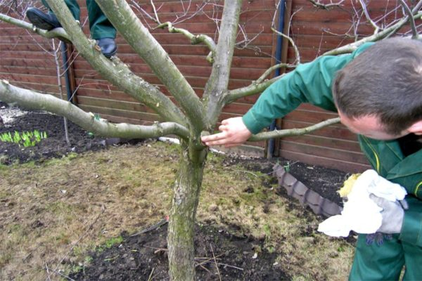 Обработка среза у дерева