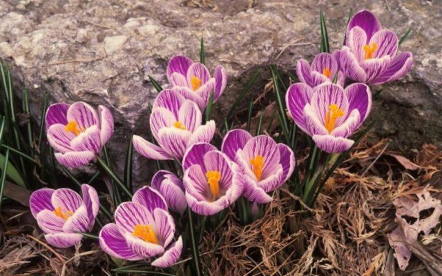 Какие цветы выкапывают на зиму