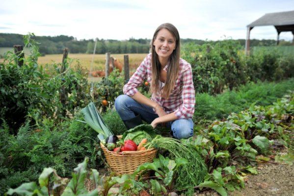 Календарь огородника: овощи и ягоды на подоконнике в Январе